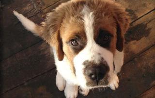 Brunelli - Animais domésticos serão protegidos por lei Junior Brunelli
